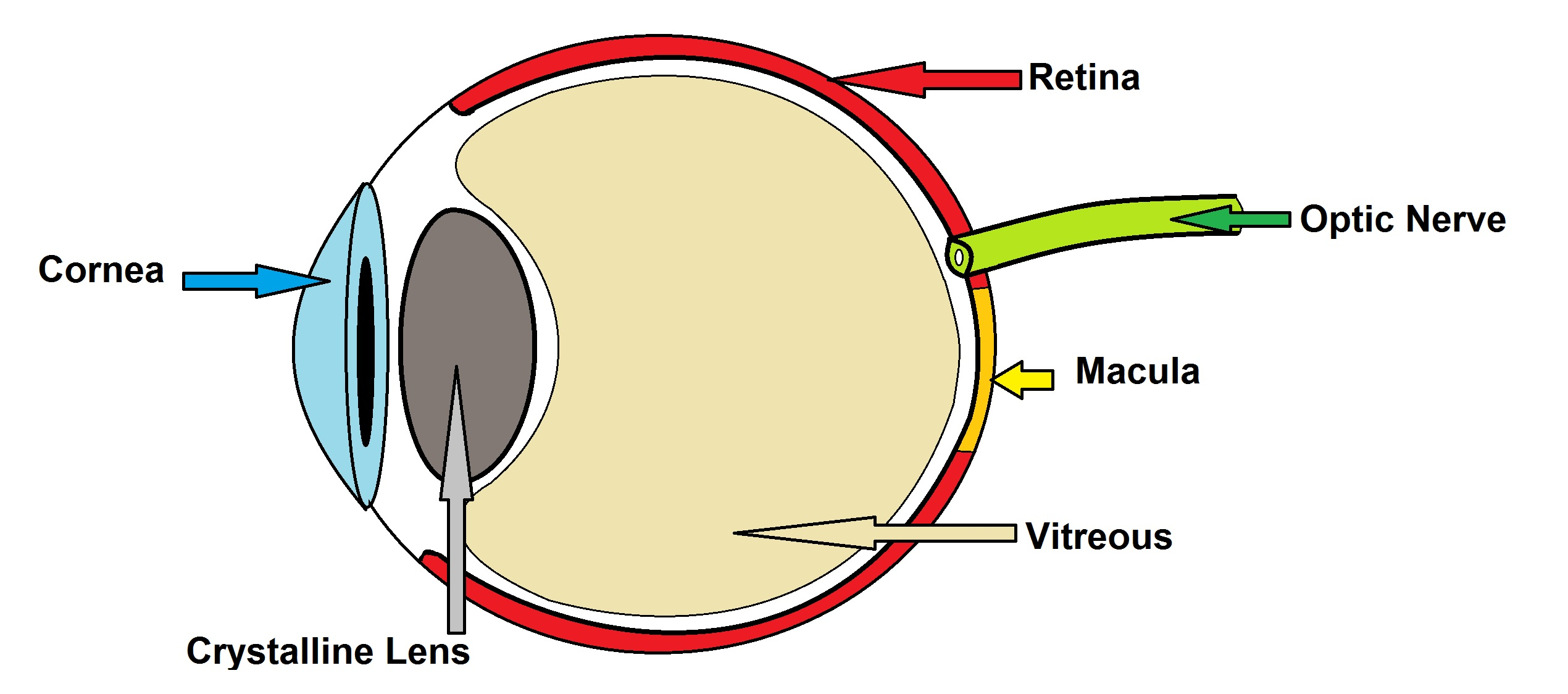 Dr petros aristodemou central portion of the eye which is occupied by a transparent gel called the vitreous the optic nerve takes the signal from the retina to the brain ccuart Images